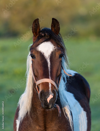 Portrait of a horse in the morning sunrise light
