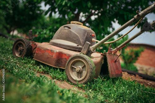 Fototapeta Lawn mower cutting green grass in backyard.Gardening background.