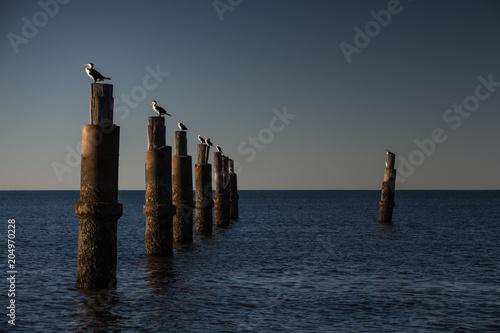 Plexiglas Zee zonsondergang Waterbirds relax on old pier stumps