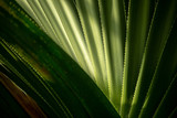 Abstract background texture formed by a palm tree leaf with bright light and drop shadow - 204972081