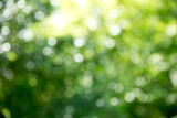 Green bokeh background and sunlight - 204972260