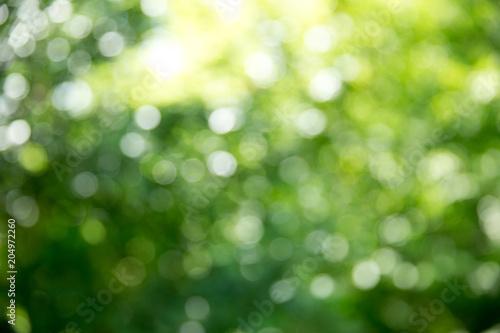 Zielony bokeh tło i światło słoneczne