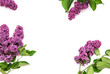 Quadro Lilac flowers white background Floral flat lay
