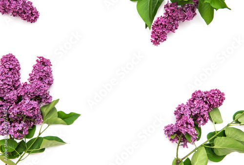 Fototapeta Lilac flowers white background Floral flat lay