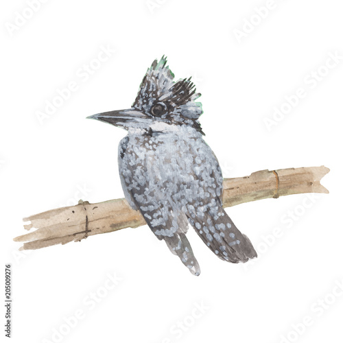 Bird  watercolor illustrations and Hand drawn sketch. Watercolor painting Cute Bird. Animal Illustration isolated on white background. © stephinlo