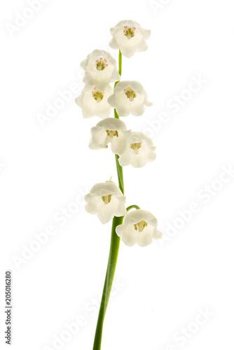 Fotobehang Lelietjes van dalen Lily of the valley