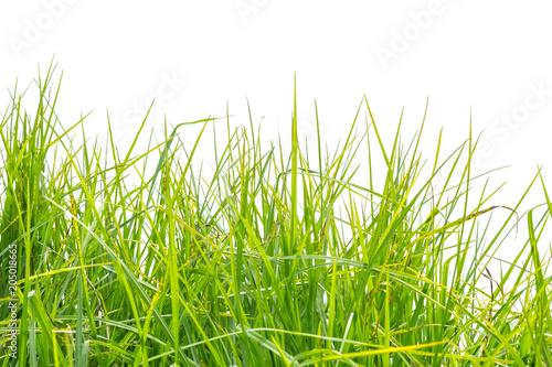 herbe © Unclesam