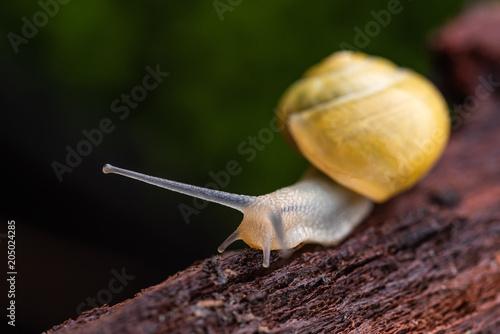 Garten Bänderschnecke Ohne Bänder Buy Photos Ap Images Detailview
