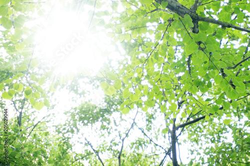 新緑の季節 光の輝き