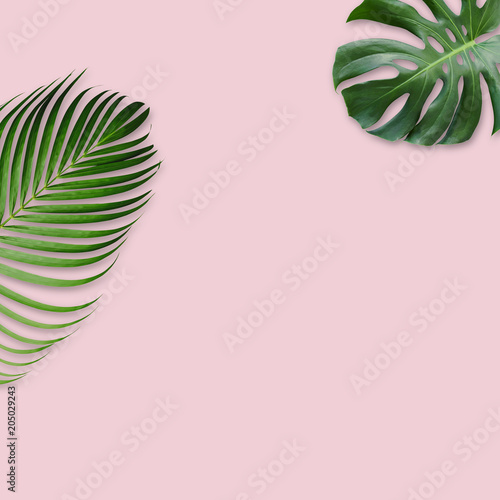 Green tropical leaves on pink background with copy space minimal design © Myimagine