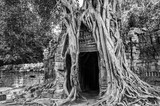 Roots of a banyan tree at Ta Prohm temple in Angkor, Siem Rep, Cambodia - 205051082
