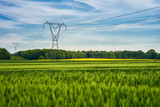 High voltage poles standing in a field under a blue sky. Juicy green fields on a colorful summer country landscape. - 205069452