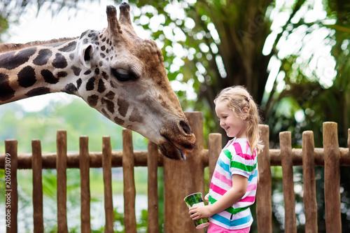 Obraz na płótnie Kids feed giraffe at zoo. Children at safari park.