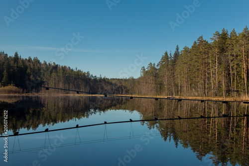 Fotobehang Blauwe jeans landscape of spring forest