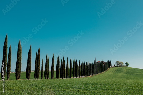 Plexiglas Natuur Alley of cypress trees in Tuscany. Italy