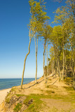 lonesome beach with trees and blue sky