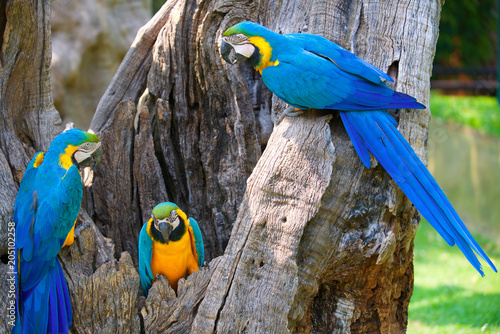 Aluminium Papegaai pappagallo azzurro giallo