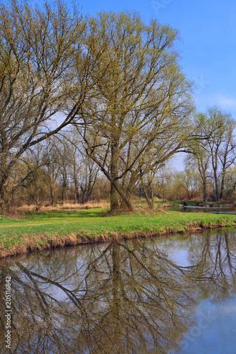 Plexiglas Lente springtime view of trees reflecting in the lake