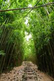 Path through dense bamboo forest, leading to famous Waimoku Falls. Popular Pipiwai trail in Haleakala National Park on Maui, Hawaii