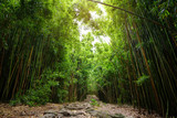 Path through dense bamboo forest, leading to famous Waimoku Falls. Popular Pipiwai trail in Haleakala National Park on Maui, Hawaii © MNStudio