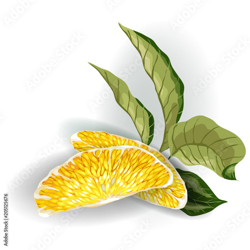 Vector image on the white background of Decorative Element with 2 orange citrus fruit tree slices and a branch curved leaves.