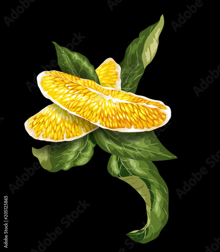 Vector image of Decorative Element with orange citrus fruit tree slice and curved leaves.
