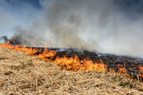 Global Warming. Burning agricultural field, smoke pollution. - 205126084