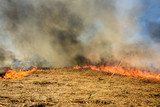 Global Warming. Burning agricultural field, smoke pollution. - 205126228