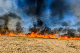 Global Warming. Burning agricultural field, smoke pollution. - 205126265