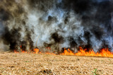 Global Warming. Burning agricultural field, smoke pollution. - 205126438