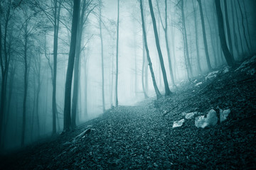 Dreamy dark blue green colored foggy forest tree landscape with path. Color filter effect used. © robsonphoto