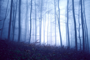 Dark blue colored fantasy foggy forest landscape. Filter color effect used. © robsonphoto