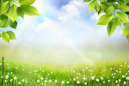 Wiosene tło, widok na trawę, kwiaty oraz na łąkę z pięknym rozmyciem bokeh - 205143468