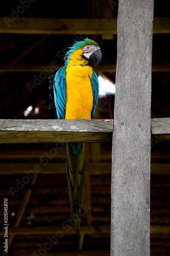 Fotobehang Papegaai Amazonas