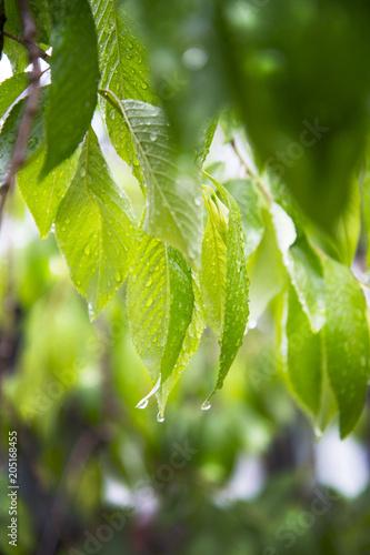 Aluminium Lime groen 雨イメージ
