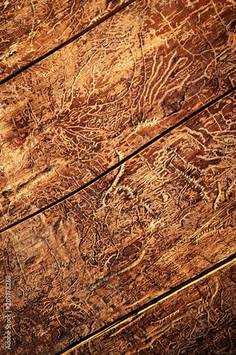 paths of beetles on old wood