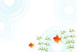 金魚 水草 暑中見舞い 背景 - 205182499
