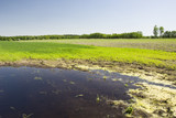 Flooded field, forest and blue sky