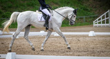 Horse horse with rider in the dressage course, in the trot. - 205198415