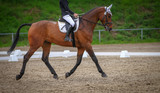 Horse brown (fox) with rider in the dressage course, in the gait trot, taken in the clipping from the side in the floating phase. - 205198607