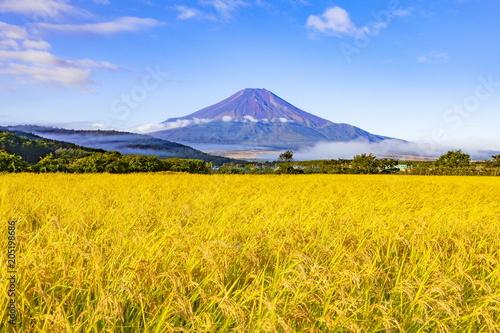 Fotobehang Oranje 富士山と稲田の風景、山梨県南都留郡忍野村にて