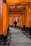 Gates tunnel in Fushimi inari shrine - 205198808