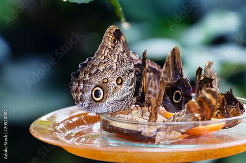 Plexiglas Vlinder Butterfly on the leaf.