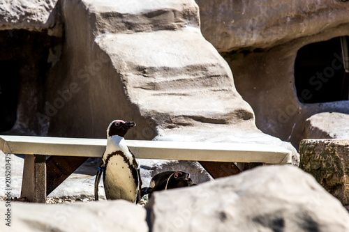 Aluminium Pinguin Penguin at rest