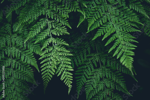 Green Fern Leaves dark nature background
