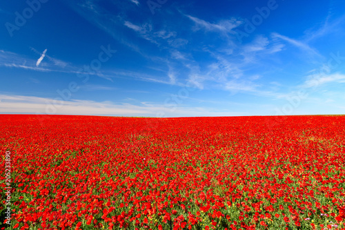 Canvas Rood traf. field of red poppies