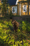 Black and brown mixed breed cat nature portrait