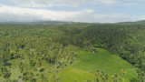 Aerial view of grove of palm trees in the hills against sky and clouds. Hills covered with green vegetation and coconut palms. Philippines, Luzon. - 205245801
