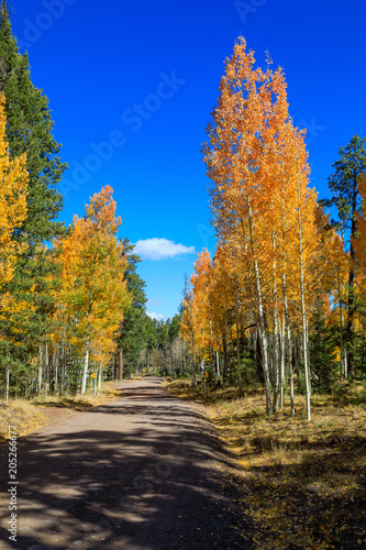 Plexiglas Honing White Mountains Arizona Autumn Landscape