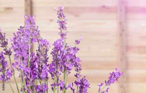 Lavender. - 205276639